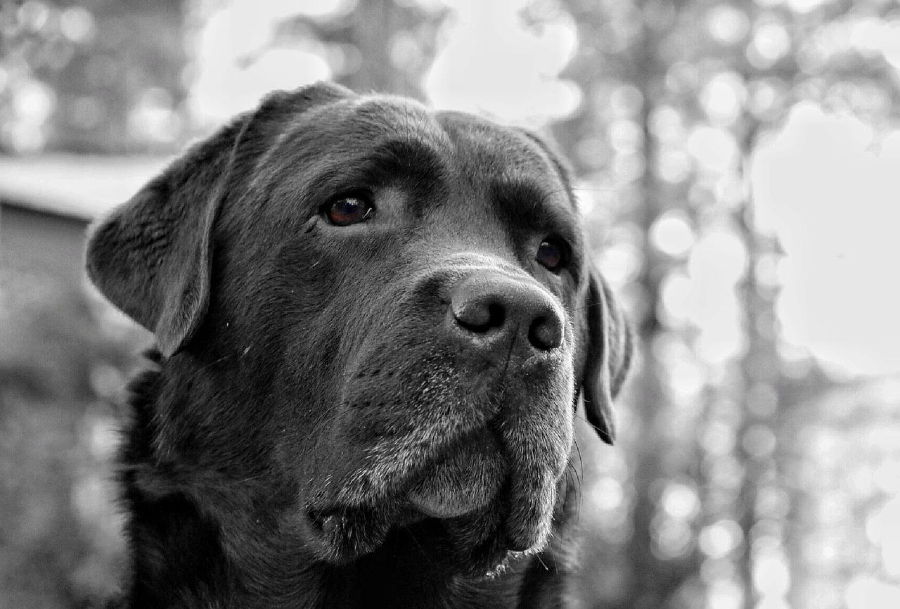 dog-996490_1280